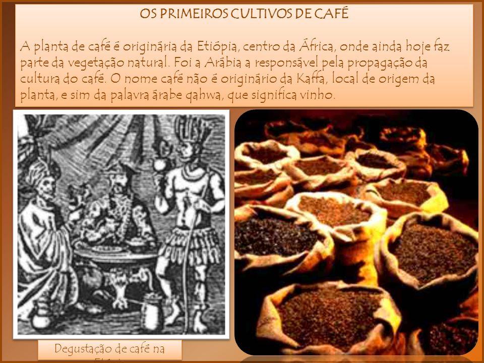 OS PRIMEIROS CULTIVOS DE CAFÉ