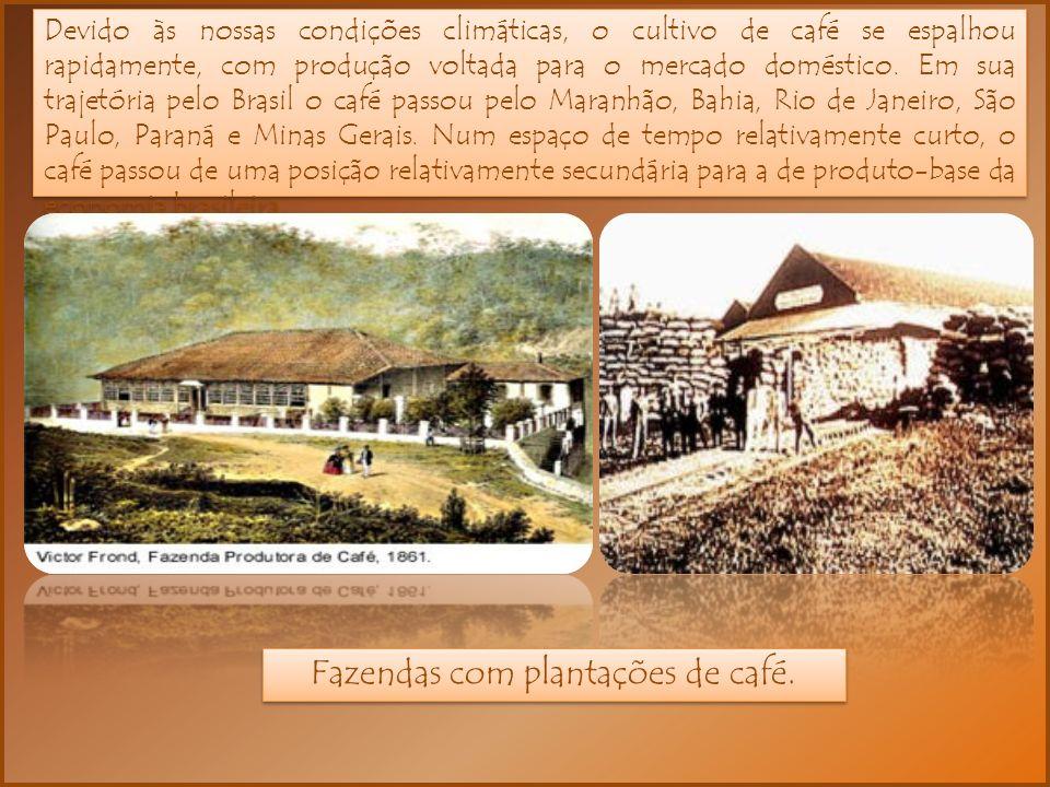 Fazendas com plantações de café.