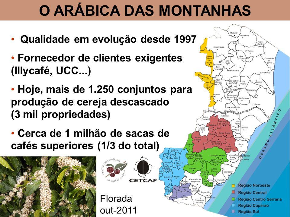 O ARÁBICA DAS MONTANHAS