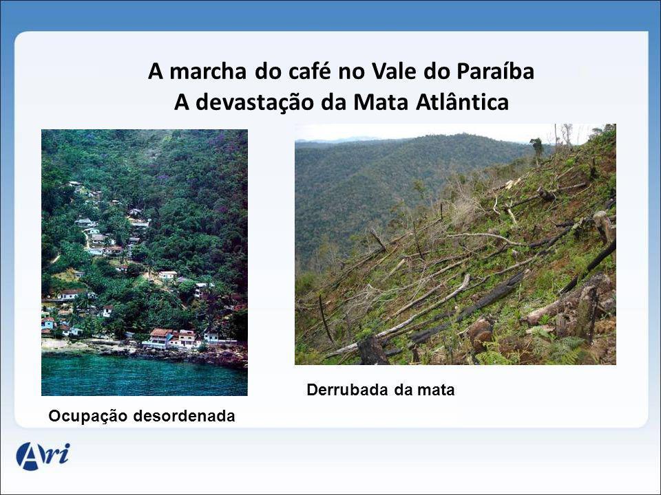 A marcha do café no Vale do Paraíba A devastação da Mata Atlântica