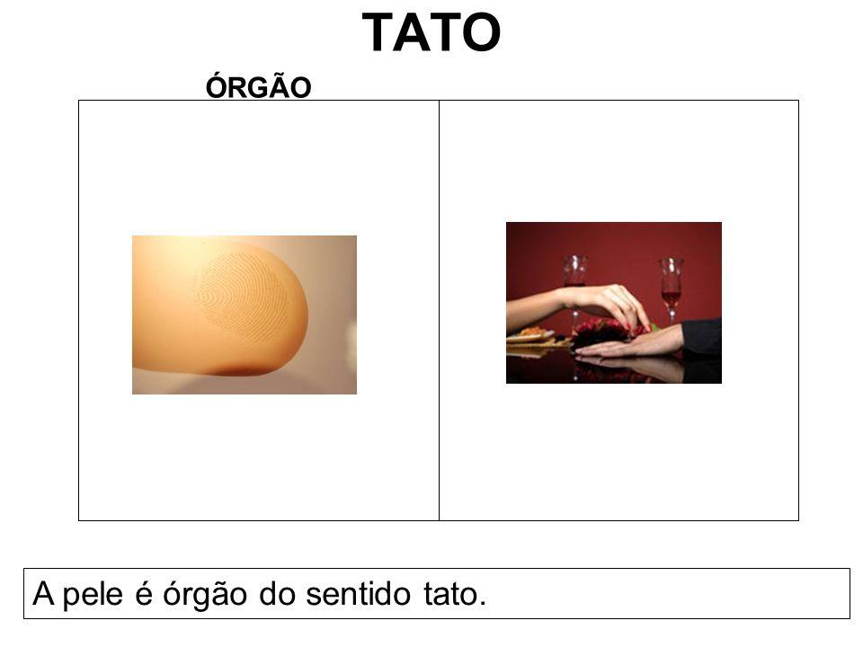TATO ÓRGÃO A pele é órgão do sentido tato.