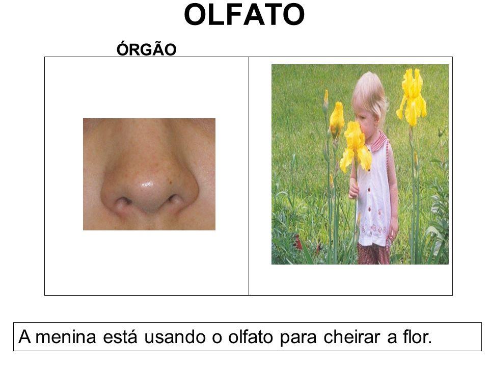 OLFATO ÓRGÃO A menina está usando o olfato para cheirar a flor.