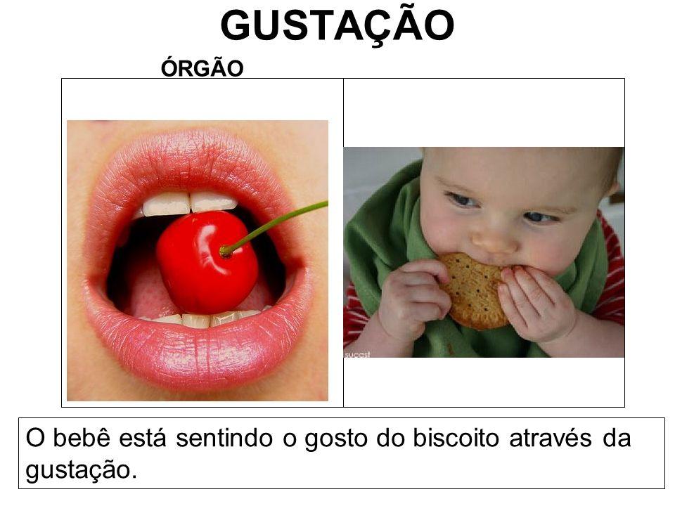 GUSTAÇÃO O bebê está sentindo o gosto do biscoito através da gustação.