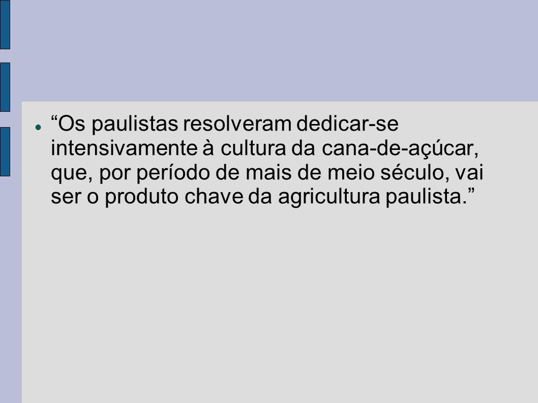 Os paulistas resolveram dedicar-se intensivamente à cultura da cana-de-açúcar, que, por período de mais de meio século, vai ser o produto chave da agricultura paulista.