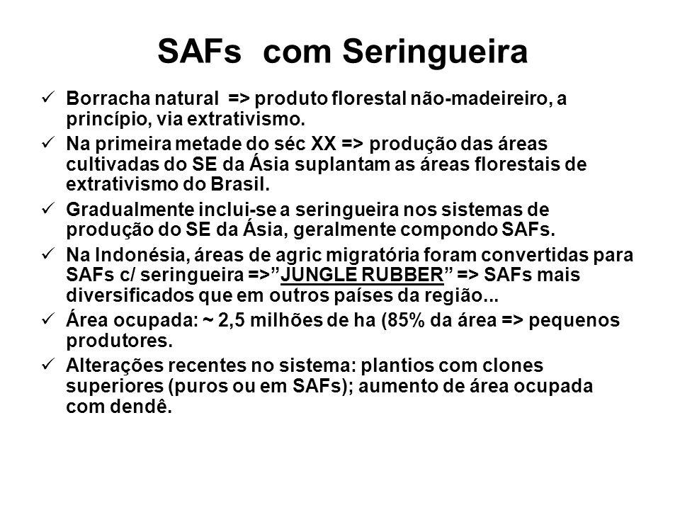 SAFs com Seringueira Borracha natural => produto florestal não-madeireiro, a princípio, via extrativismo.