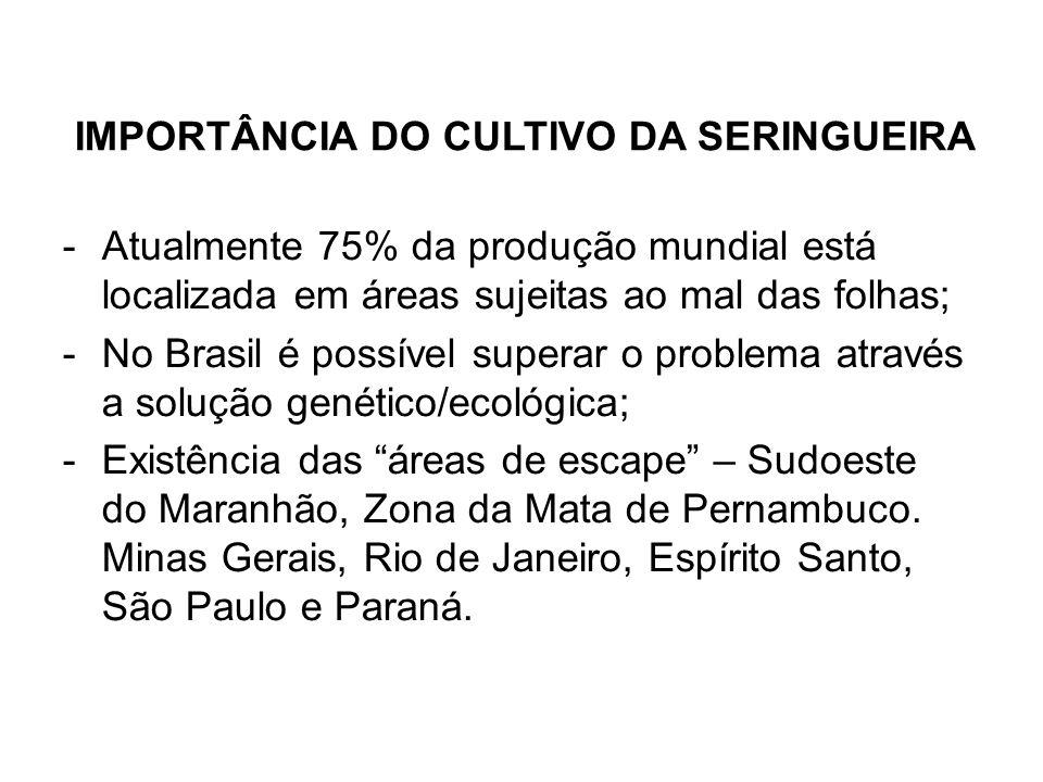 IMPORTÂNCIA DO CULTIVO DA SERINGUEIRA