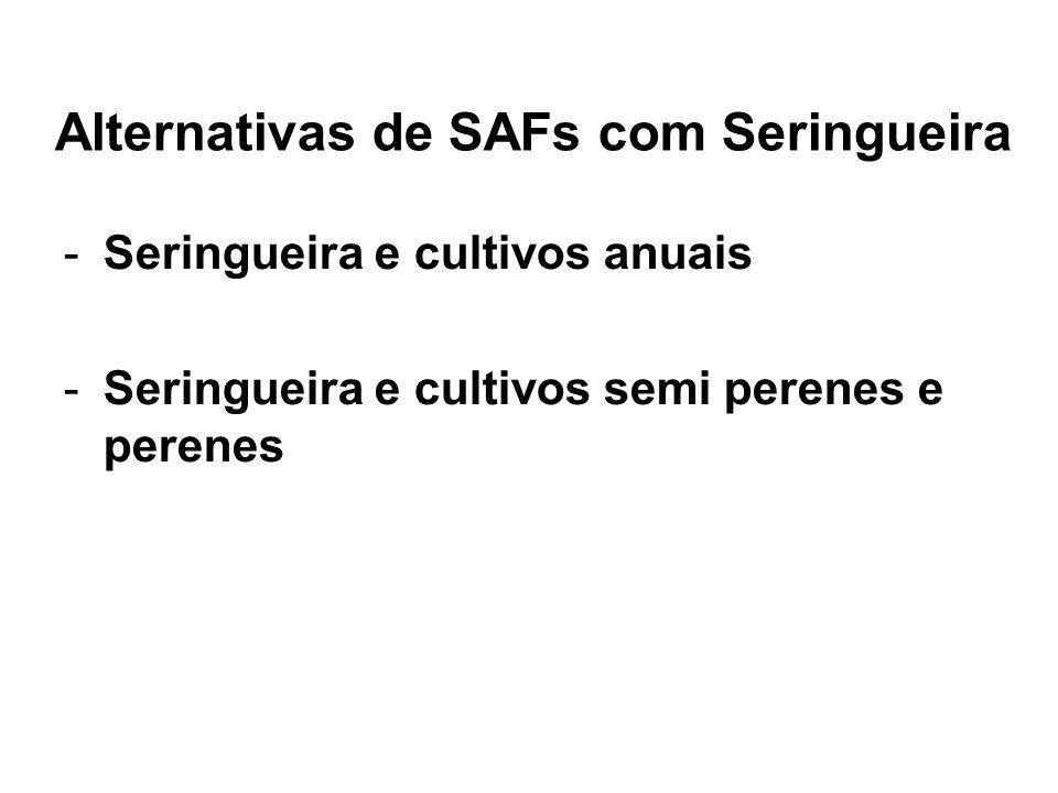 Alternativas de SAFs com Seringueira