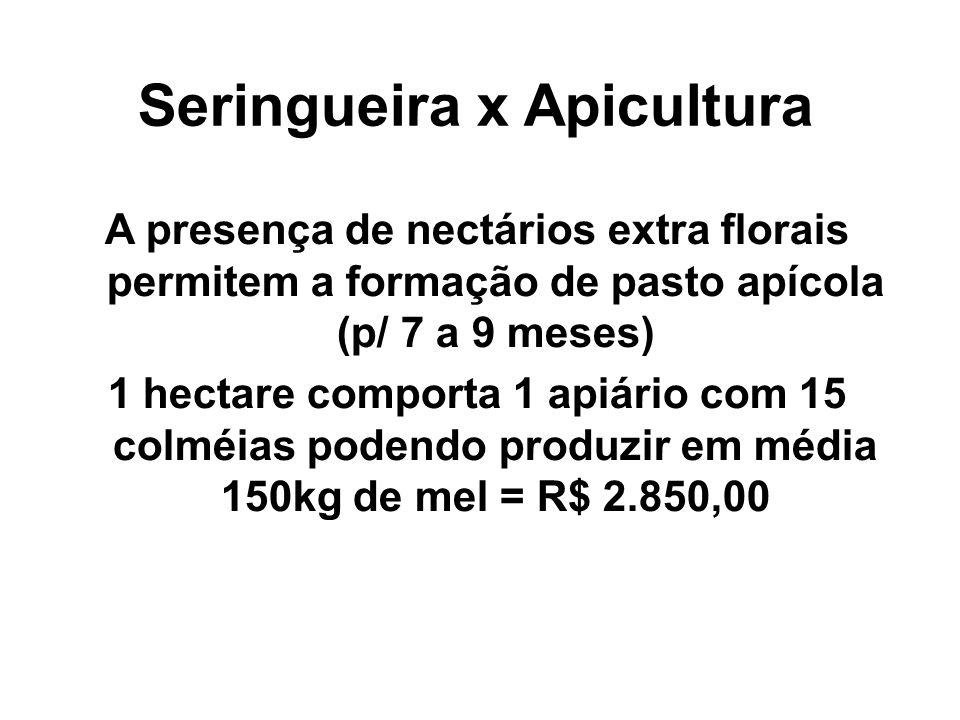 Seringueira x Apicultura