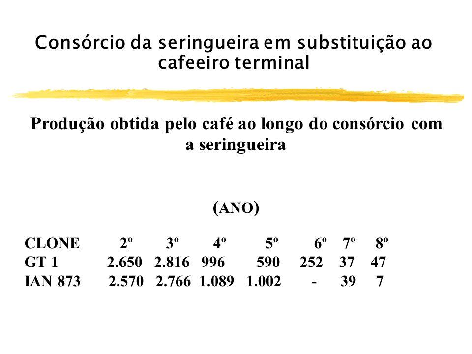 Consórcio da seringueira em substituição ao cafeeiro terminal