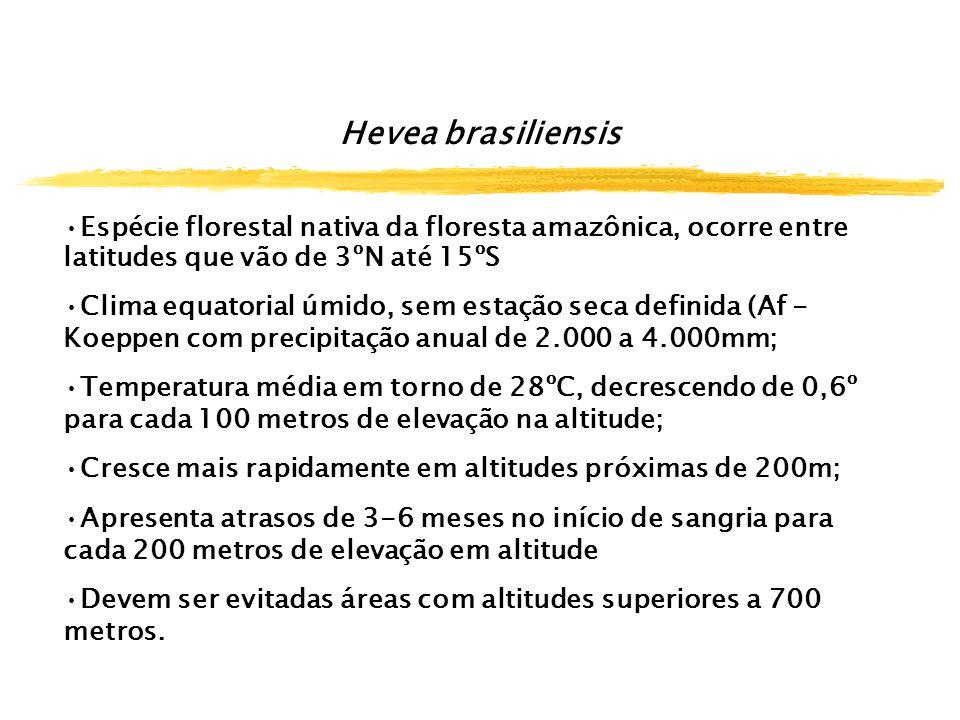Hevea brasiliensis Espécie florestal nativa da floresta amazônica, ocorre entre latitudes que vão de 3ºN até 15ºS.