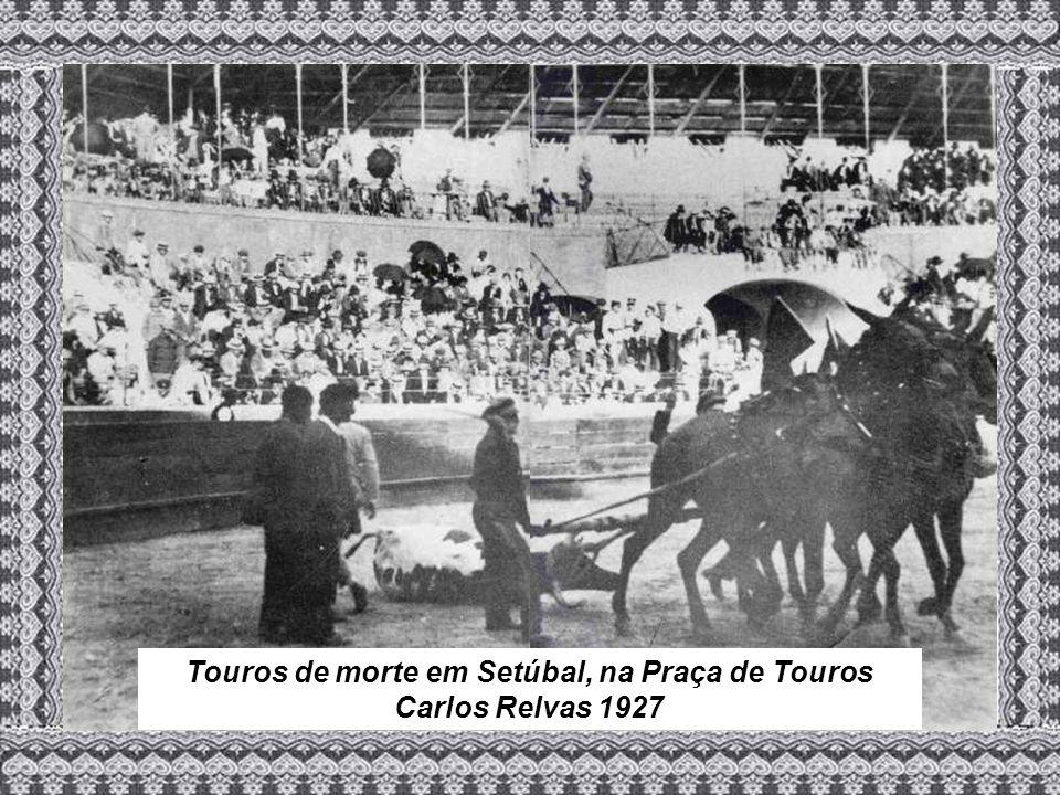 Touros de morte em Setúbal, na Praça de Touros Carlos Relvas 1927