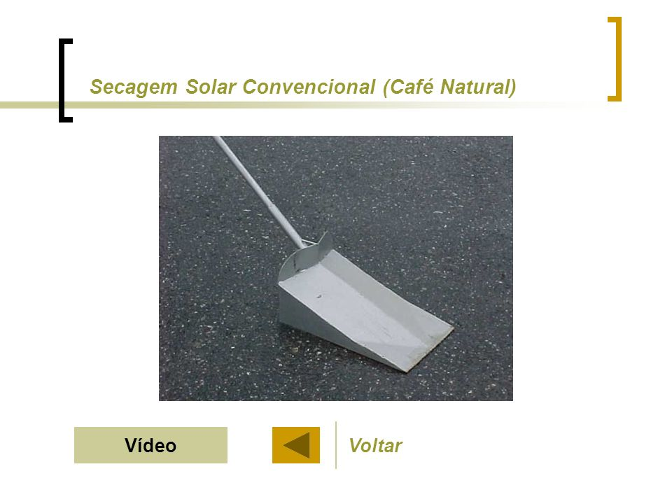 Secagem Solar Convencional (Café Natural)