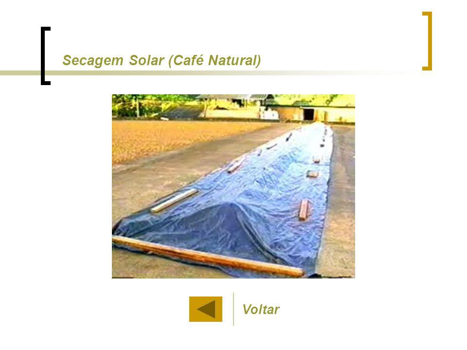 Secagem Solar (Café Natural)