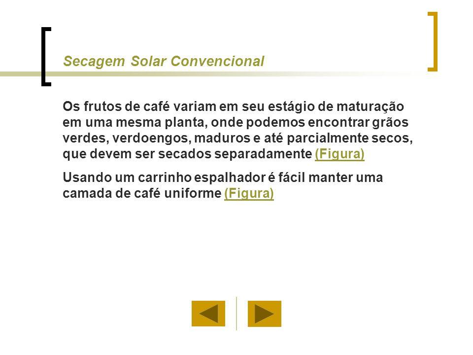 Secagem Solar Convencional