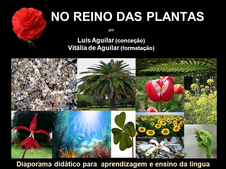 NO REINO DAS PLANTAS por. Luís Aguilar (conceção) Vitália de Aguilar (formatação)
