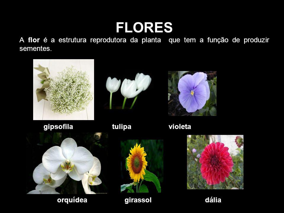 FLORES A flor é a estrutura reprodutora da planta que tem a função de produzir sementes.