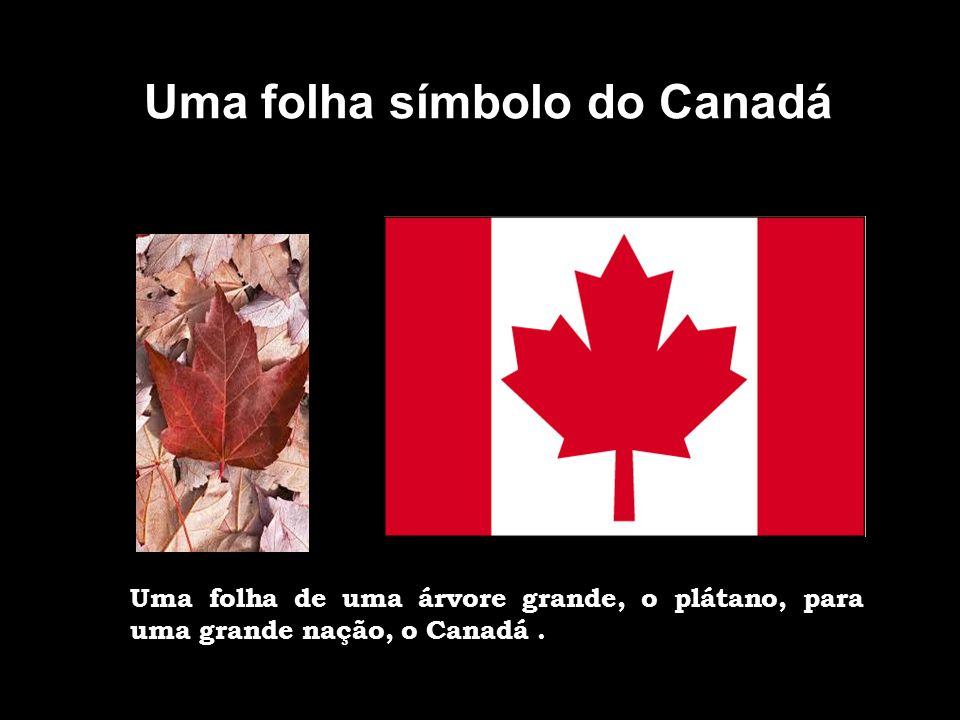 Uma folha símbolo do Canadá
