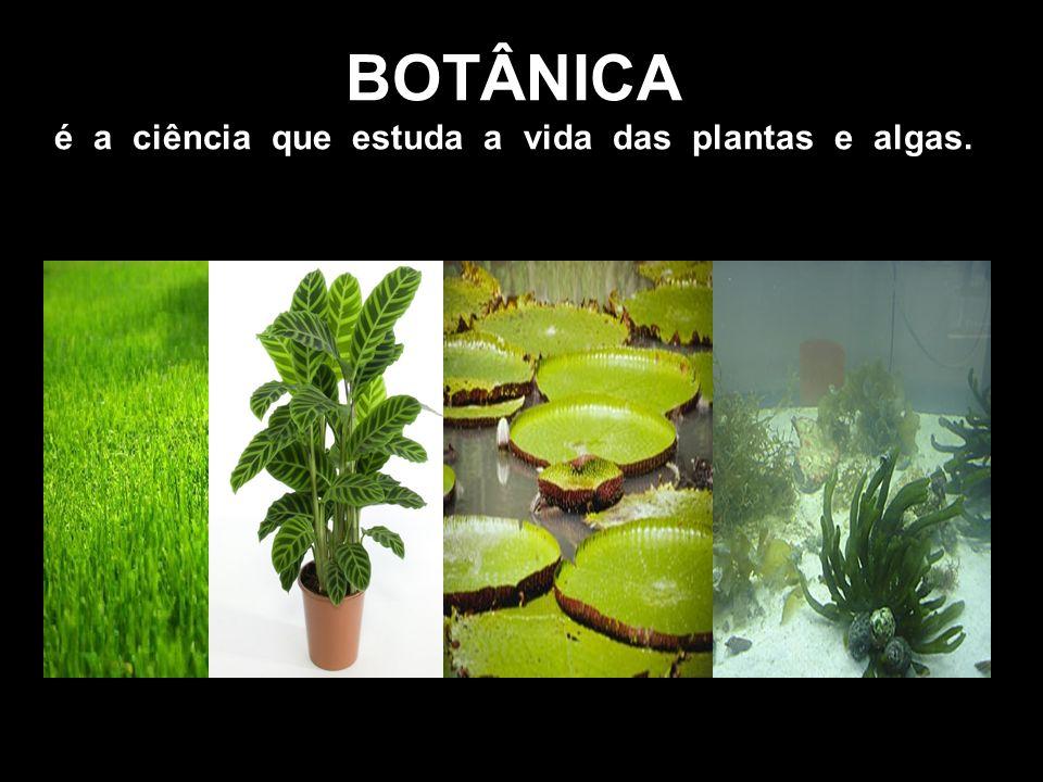 BOTÂNICA é a ciência que estuda a vida das plantas e algas.