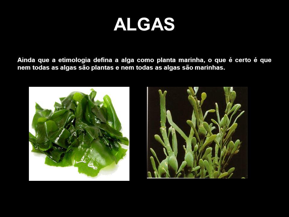 ALGAS Ainda que a etimologia defina a alga como planta marinha, o que é certo é que nem todas as algas são plantas e nem todas as algas são marinhas.