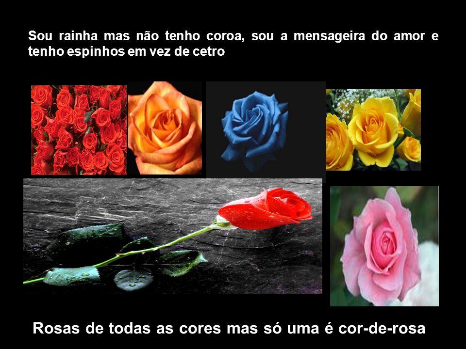 Rosas de todas as cores mas só uma é cor-de-rosa