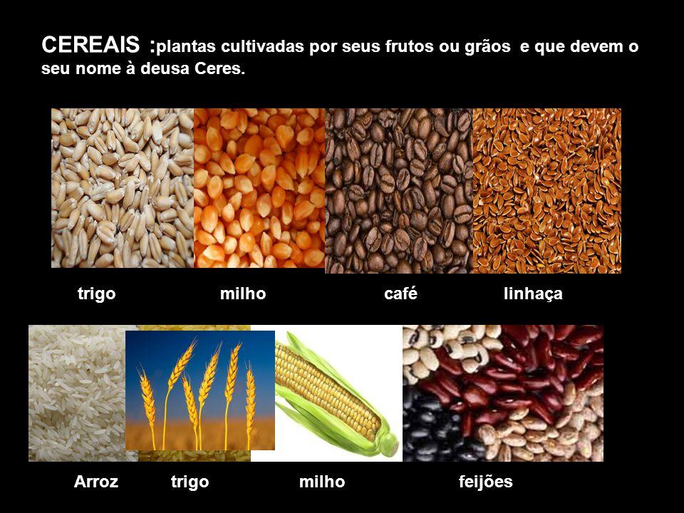 CEREAIS :plantas cultivadas por seus frutos ou grãos e que devem o seu nome à deusa Ceres.