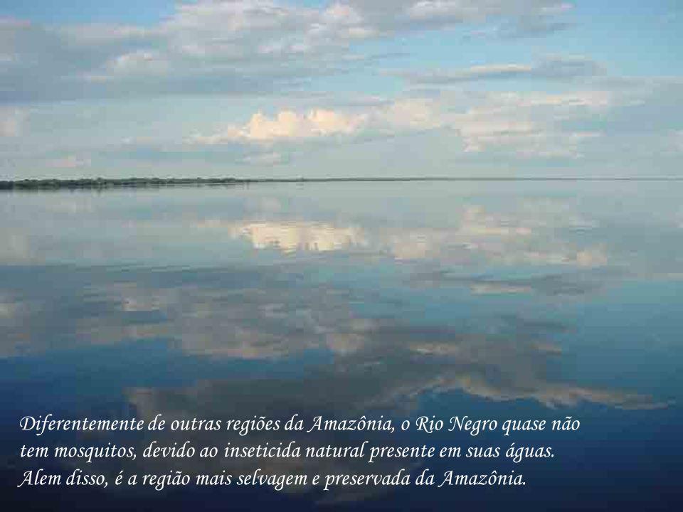 Diferentemente de outras regiões da Amazônia, o Rio Negro quase não tem mosquitos, devido ao inseticida natural presente em suas águas.