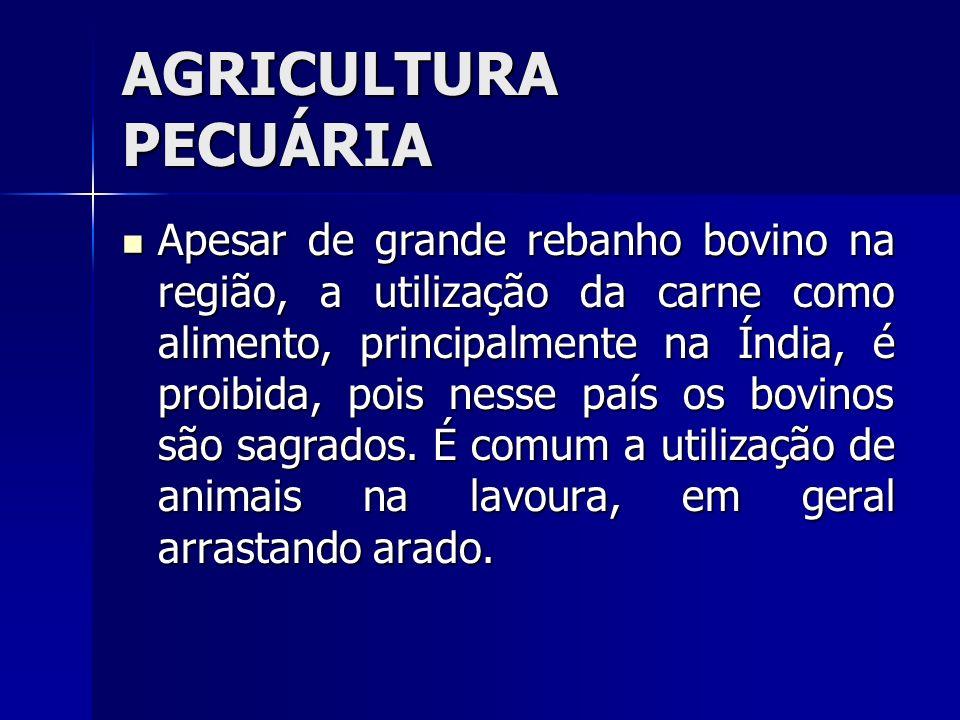 AGRICULTURA PECUÁRIA