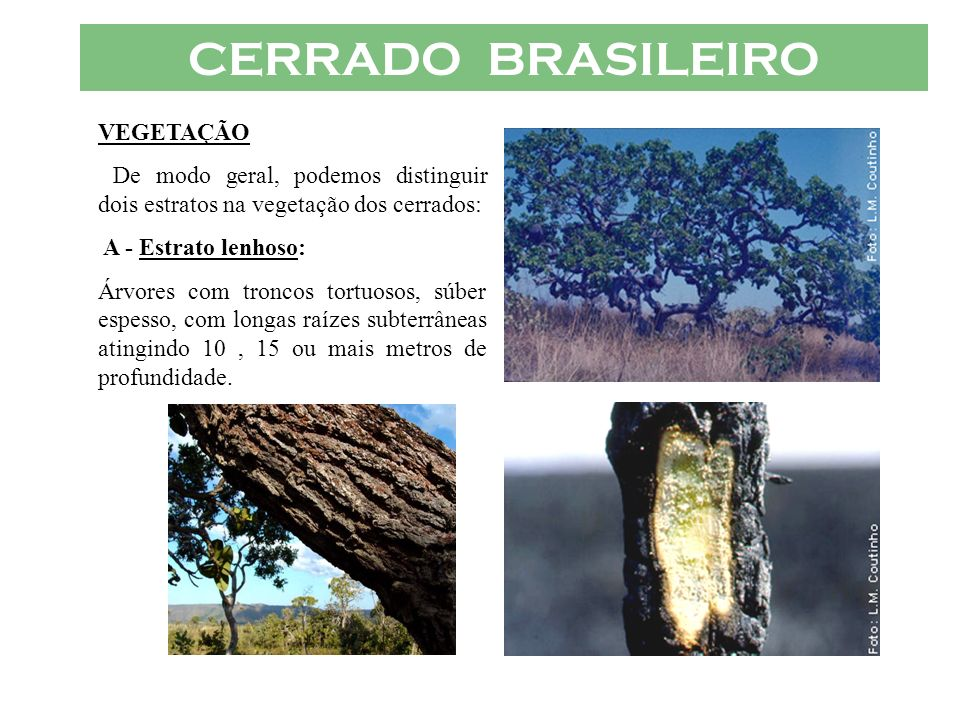 CERRADO BRASILEIRO VEGETAÇÃO