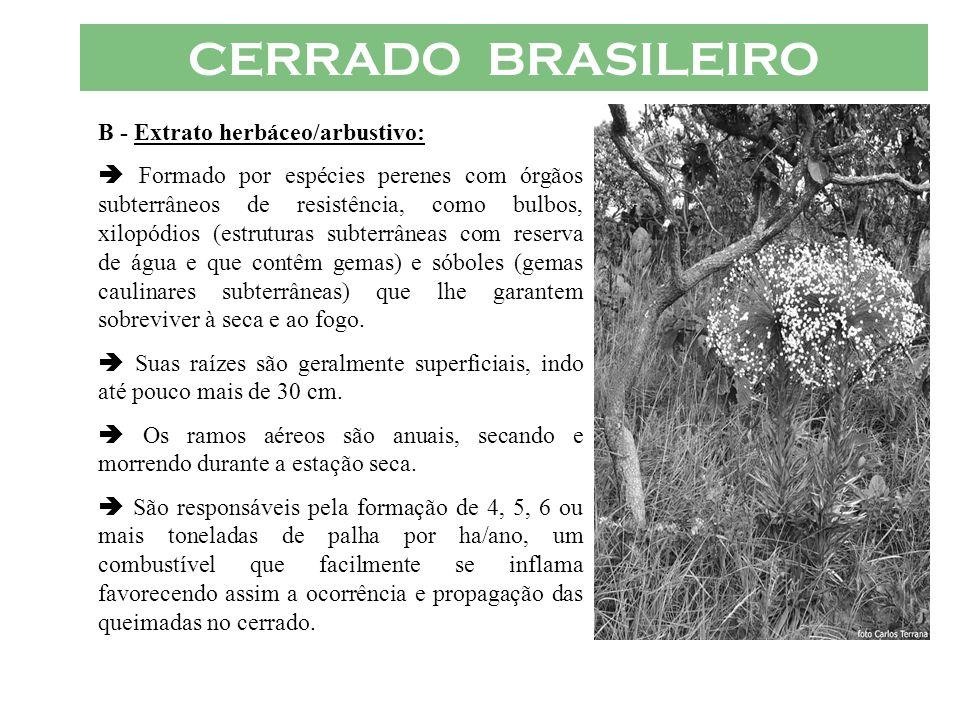 CERRADO BRASILEIRO B - Extrato herbáceo/arbustivo: