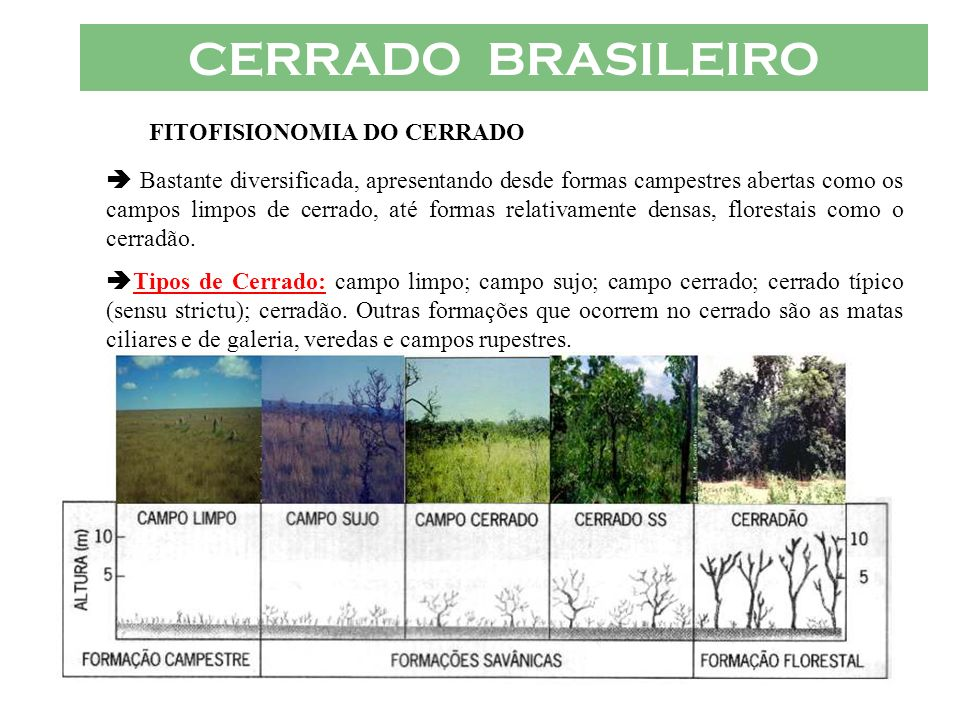 FITOFISIONOMIA DO CERRADO