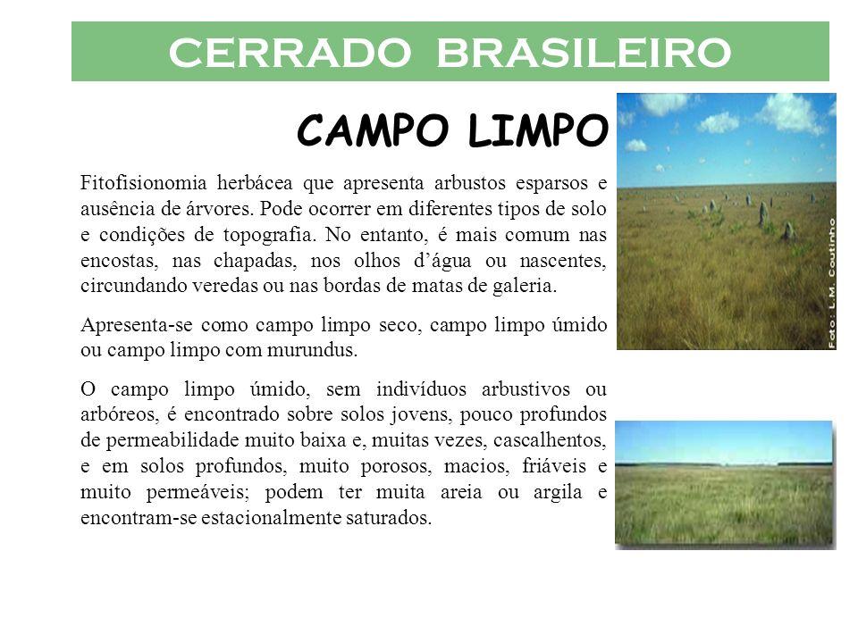CERRADO BRASILEIRO CAMPO LIMPO