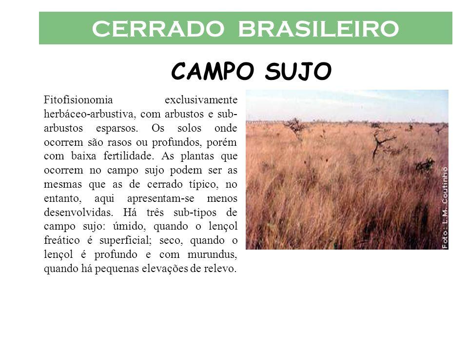 CERRADO BRASILEIRO CAMPO SUJO