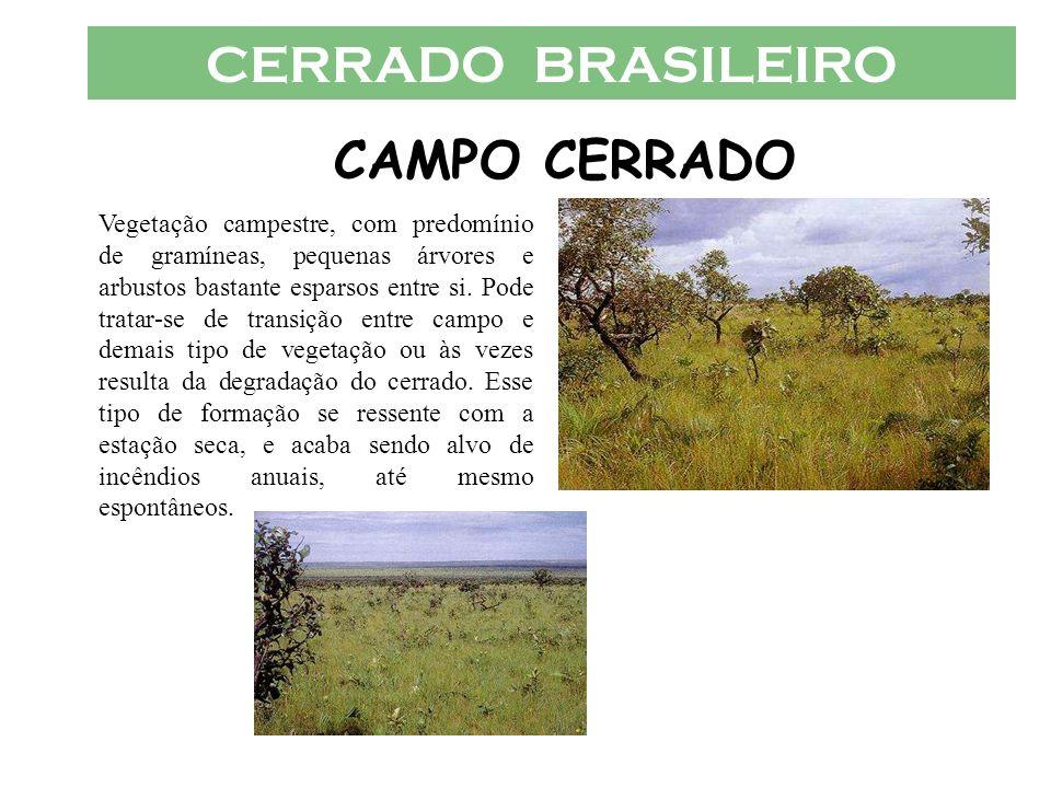 CERRADO BRASILEIRO CAMPO CERRADO