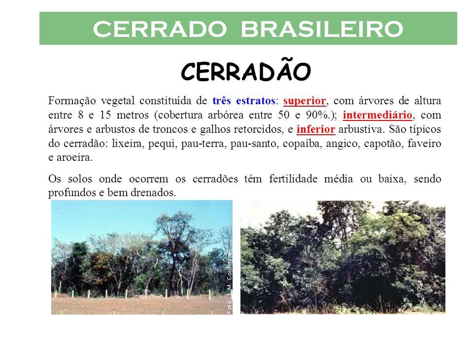 CERRADO BRASILEIRO CERRADÃO