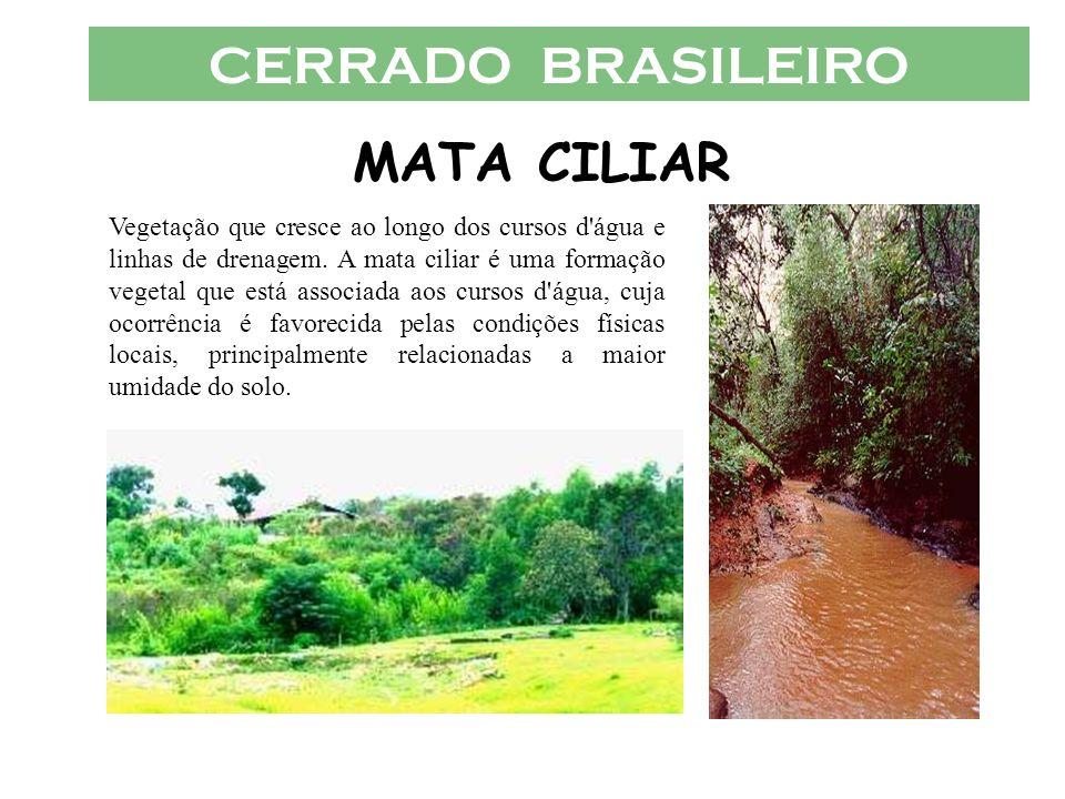 CERRADO BRASILEIRO MATA CILIAR