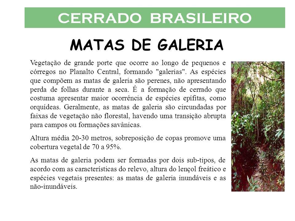 CERRADO BRASILEIRO MATAS DE GALERIA