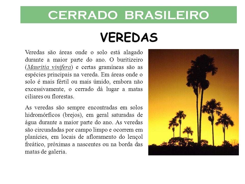 CERRADO BRASILEIRO VEREDAS