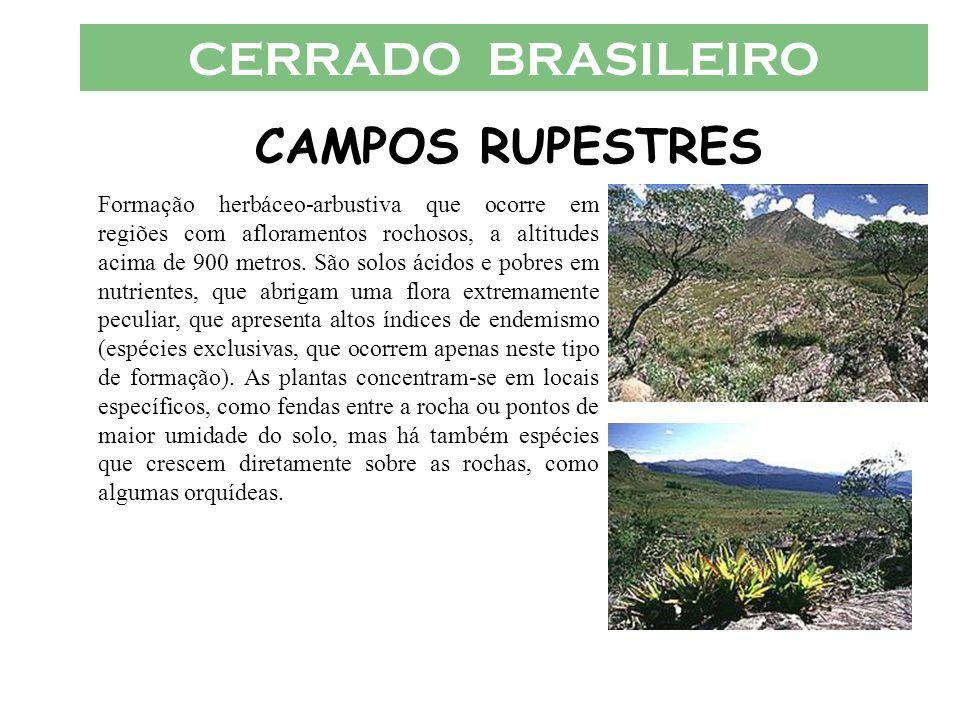 CERRADO BRASILEIRO CAMPOS RUPESTRES