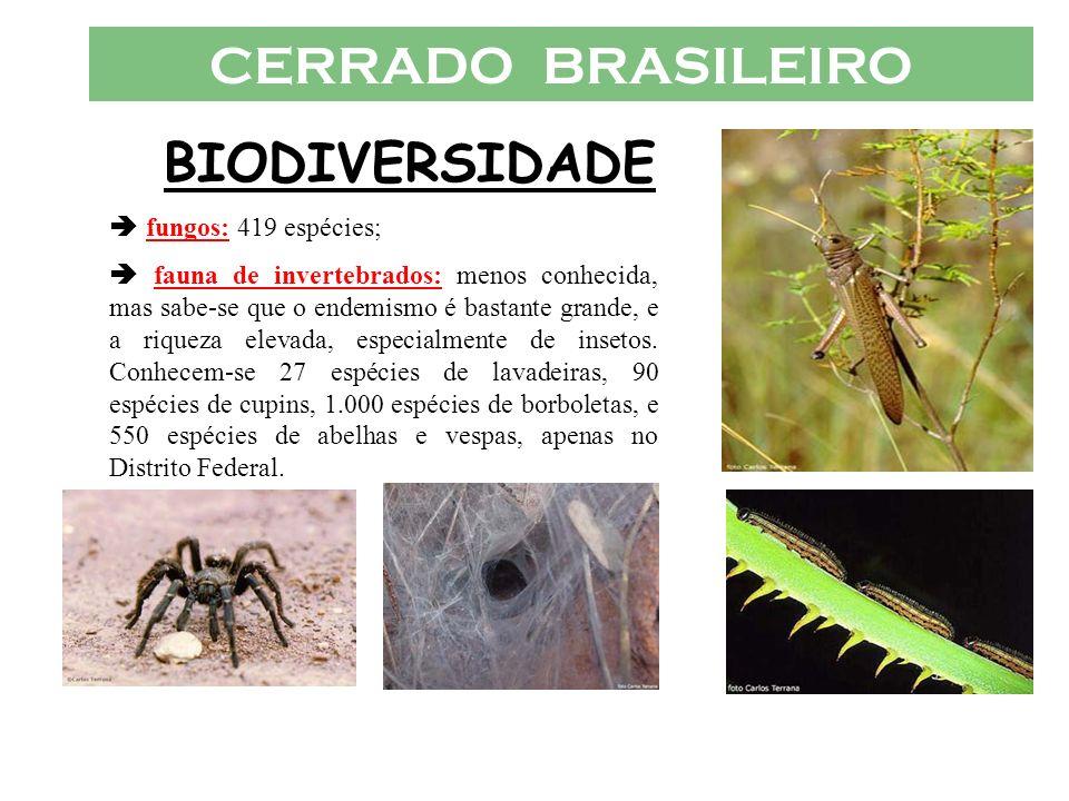 CERRADO BRASILEIRO BIODIVERSIDADE  fungos: 419 espécies;