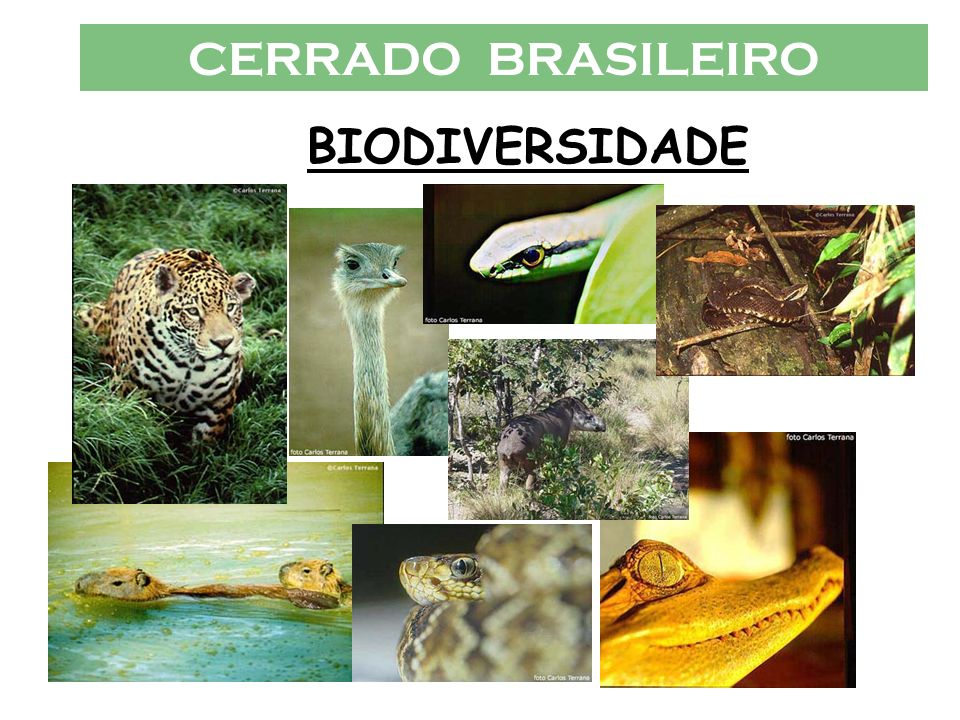 CERRADO BRASILEIRO BIODIVERSIDADE
