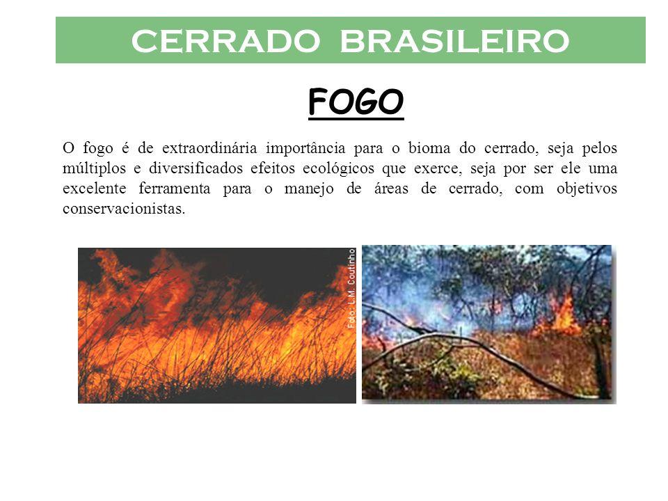 CERRADO BRASILEIRO FOGO