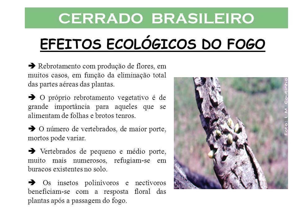 EFEITOS ECOLÓGICOS DO FOGO