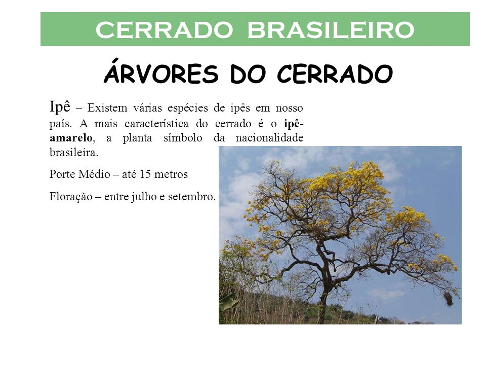 CERRADO BRASILEIRO ÁRVORES DO CERRADO
