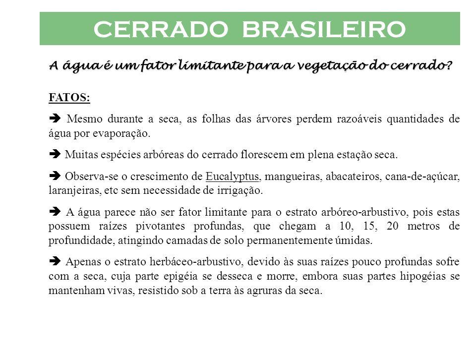 CERRADO BRASILEIRO A água é um fator limitante para a vegetação do cerrado FATOS: