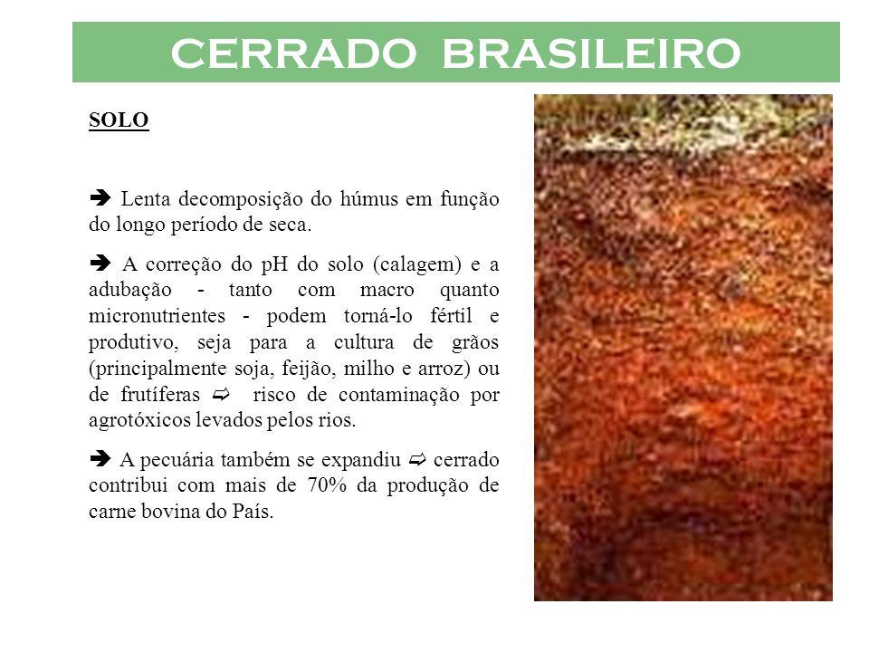 CERRADO BRASILEIRO SOLO