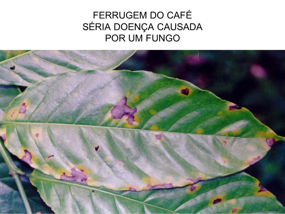 FERRUGEM DO CAFÉ SÉRIA DOENÇA CAUSADA POR UM FUNGO