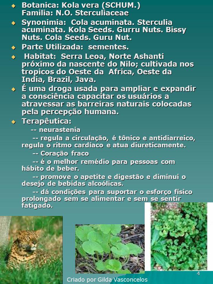 Botanica: Kola vera (SCHUM.) Familia: N.O. Sterculiaceae