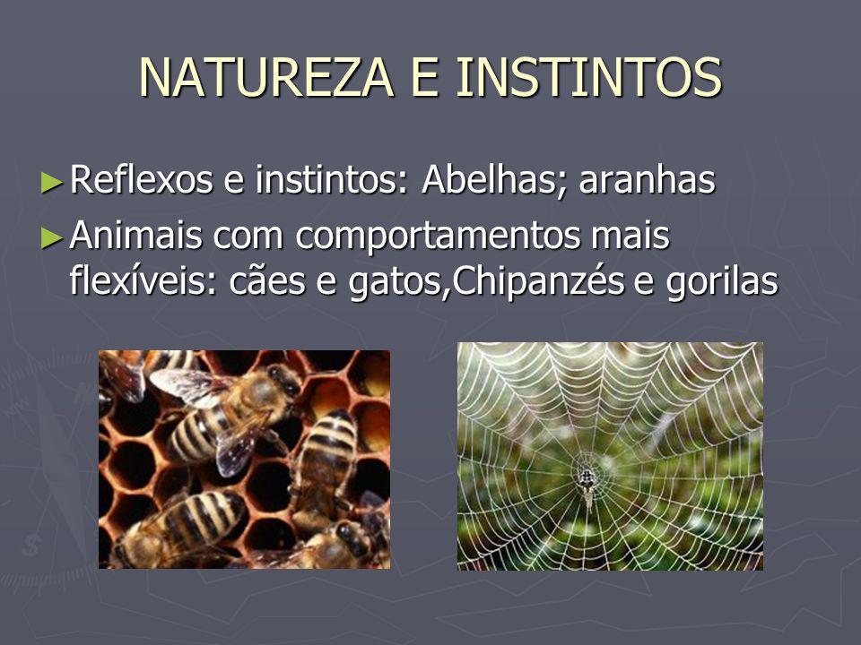 NATUREZA E INSTINTOS Reflexos e instintos: Abelhas; aranhas