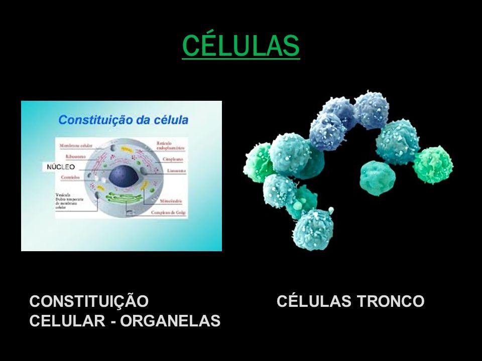 CÉLULAS CONSTITUIÇÃO CELULAR - ORGANELAS CÉLULAS TRONCO