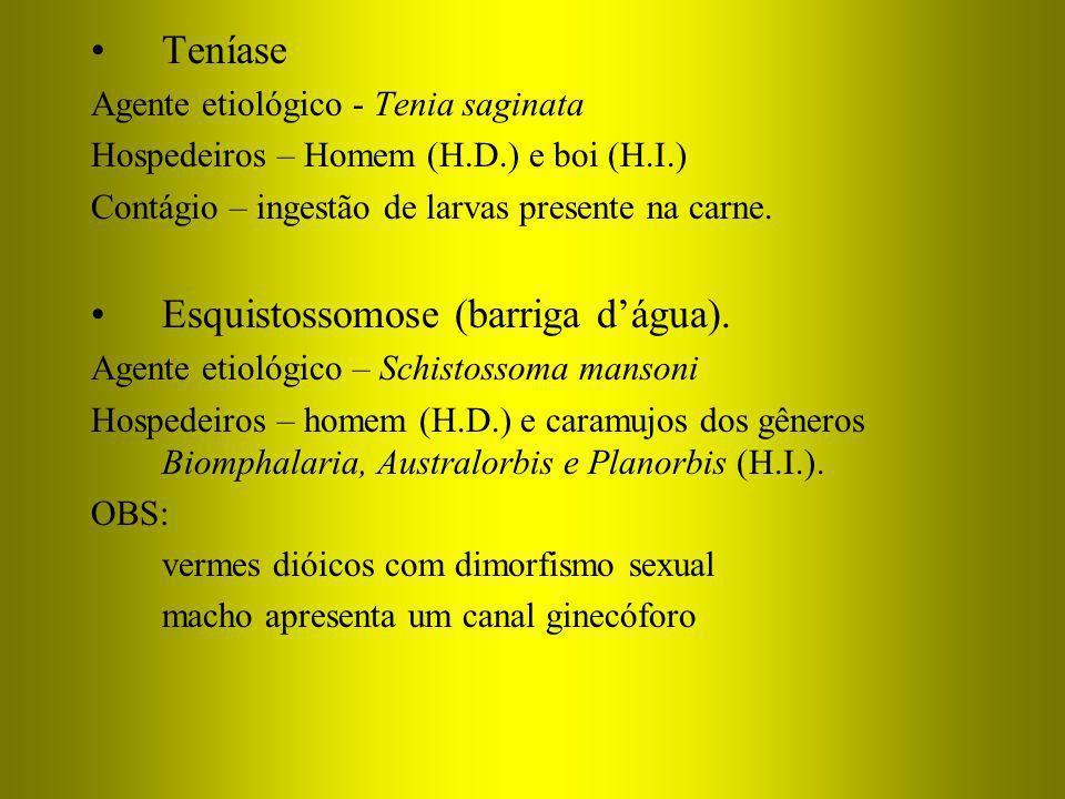 Esquistossomose (barriga d'água).
